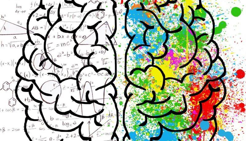 Brain 1920x810 1 800x460 - Home